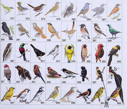 Similiar Bird Names And Pitchers Keywords